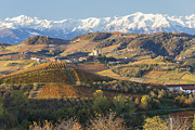 Winemaking Photos - Vineyards, Near Alba, Langhe, Piedmont, Italy by Peter Adams
