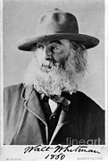 Photo Realism Photos - Walt Whitman, American Poet by Photo Researchers