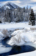 Snow Covered Pine Trees Prints - Wasatch Mountains in Winter Print by Utah Images