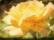 City Photography Digital Art - Yellow Rose by Cathie Tyler