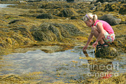 Maine Shore Framed Prints - Young Girl Exploring A Maine Tidepool Framed Print by Ted Kinsman