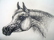 Horses Drawings - Arabian Horse  by Angel  Tarantella