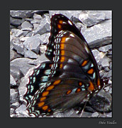 Wings Artwork Mixed Media Prints - Butterfly Collection Print by Debra     Vatalaro