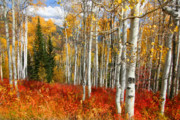 October Originals - Rocky Mountain Fall by Mark Smith