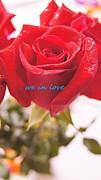 Rose Print by Gornganogphatchara Kalapun