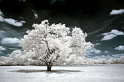 Infrared Photos - 39 by Mike Irwin