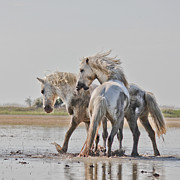 Pour Photos - White horses by Egija Labanovska