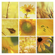 Aimelle Photography Framed Prints - 3x3 Yellow Framed Print by Aimelle 