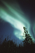 A Brilliant Display Of Auroral Lights Print by Paul Nicklen