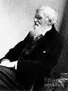 Evolution Posters - Alfred Russel Wallace, Welsh Naturalist Poster by Science Source