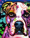 Pet Art Painting Framed Prints - American Bulldog Framed Print by Dean Russo