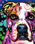 Dean Russo - American Bulldog