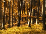 Transilvania Metal Prints - Autumn in forest Metal Print by Odon Czintos