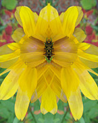 Blend Photos - Black-Eyed Susan by Michele Caporaso