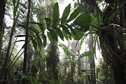 Epiphyte Photos - Bromeliad Bromeliaceae And Tree Fern by Cyril Ruoso