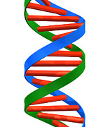 Genetics Prints - Dna Helix Print by Roger Harris