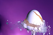 High Speed Prints - Egg Hit By A Bullet Print by Ted Kinsman