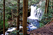 Rushing Prints - Elakala Falls on Shays Run Print by Thomas R Fletcher