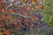 Fall Along West Fork River Print by Thomas R Fletcher