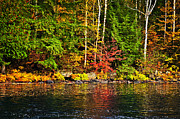 Autumn Foliage Prints - Fall forest and river landscape Print by Elena Elisseeva