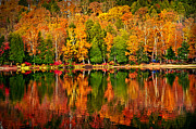 Red Autumn Prints - Fall forest reflections Print by Elena Elisseeva