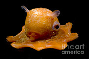 Cartoonish Art - Flapjack Octopus by Dante Fenolio