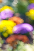 Blurred Framed Prints - Flower garden in sunshine Framed Print by Elena Elisseeva
