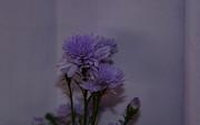 JISS JOSEPH - flowers