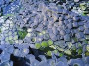 Tidal Pool Photos - Giants Causeway, Co Antrim, Ireland by The Irish Image Collection 
