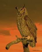 Owl Posters - Great Horned Owl Poster by Larry Linton