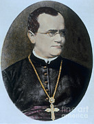 Heredity Prints - Gregor Mendel, Father Of Genetics Print by Science Source