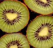 Kiwis Prints - 4 Kiwi Print by Nancy Mueller