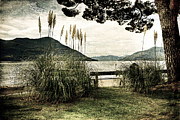 Cane Photos - Lake Maggiore by Joana Kruse