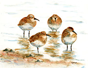 Sandpiper Painting Framed Prints - 4 Little Pipers Framed Print by Marsha Elliott