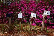 Fairhope Prints - 4 Mailboxes Print by Michael Thomas