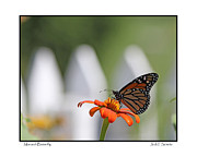 Picket Fence Prints - Monarch Butterfly Print by Jack Schultz