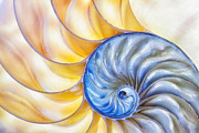 Shell Pattern Framed Prints - Nautilus Shell Framed Print by Dawna  Moore Photography