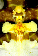 Exotic Photos - Orchid Flowers of C Ribet by C Ribet