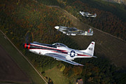 Old Objects Prints - P-51 Cavalier Mustang With Supermarine Print by Daniel Karlsson