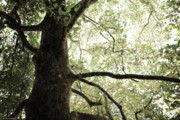 Tree Pyrography Metal Prints - Photography Metal Print by Jayde Rowley