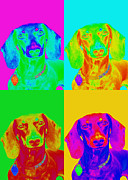 Dachshunds Doxie Digital Art - Pop Art Dachshund by Renae Frankz