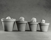 Anne Geddes Prints - 4 Pots Print by Anne Geddes