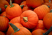 Sell Metal Prints - Pumpkins Metal Print by Elena Elisseeva