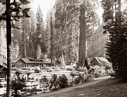 Lodging House Prints - Sequoia National Park Print by Granger