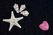 Starfish On Black Sand Print by Joana Kruse