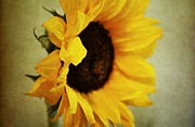 Sunflowers - Sunflower by Cathie Tyler