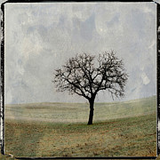 Winter Landscapes Posters - Textured tree Poster by Bernard Jaubert