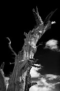 Haunted  Digital Art Originals - Tree art by Lloyd Scott