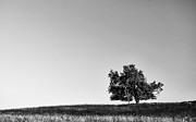 Minimalist Landscape Framed Prints - Untitled  Framed Print by Jacob Messer