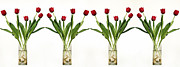 Flowers On White Background Prints - 4 Vases Of Tulips  Print by Eyal Fischer